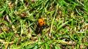 Nature insects grass macro hdr photography ladybirds wallpaper